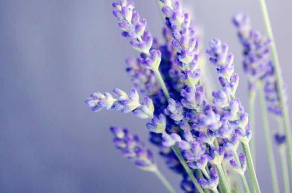 aromatherapy 4
